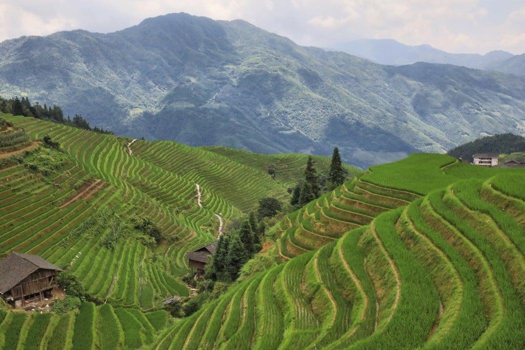chinesische Reisterrassen