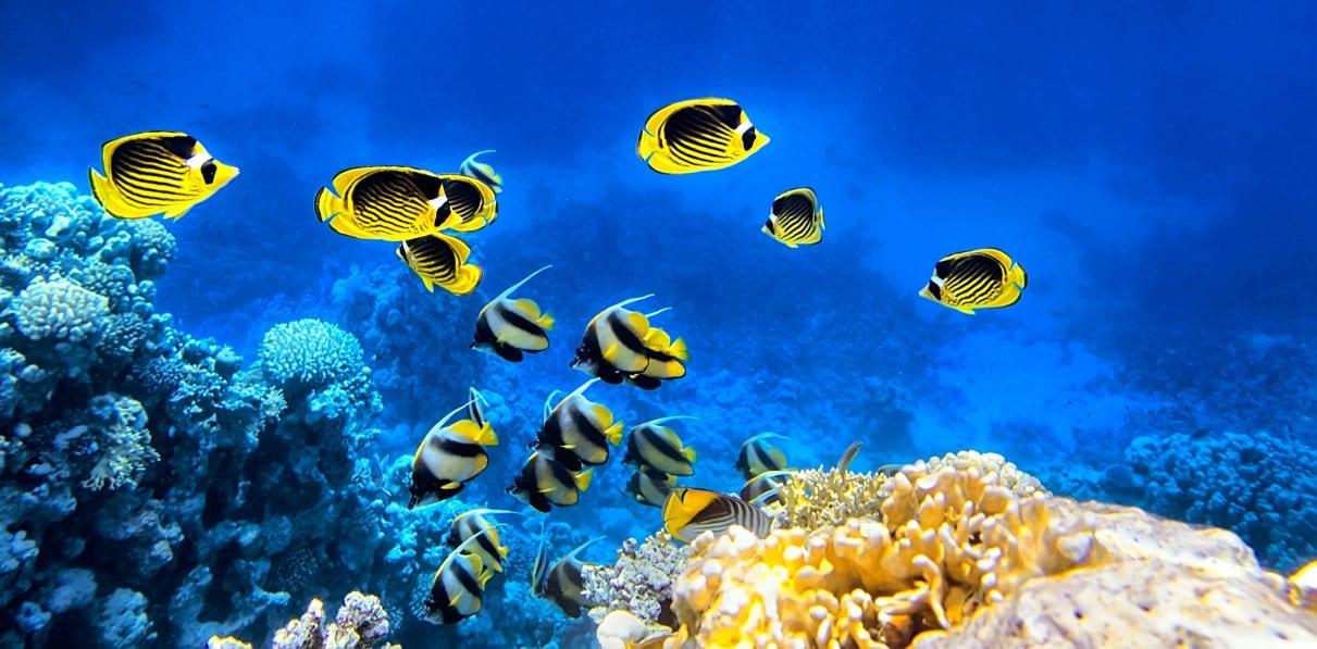 die Korallen-Unterwasserwelt vor Ägypten ist atemberaubend